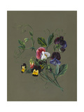 Sweet Peas (Quitro) and Violas, 1830 (W/C and Bodycolour on Paper with a Prepared Ground) Giclee Print by Louise D'Orleans