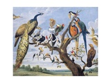 Concert of Birds, by Paul De Vos (Circa 1591-1678), Netherlands, 17th Century Giclee Print by Paul de Vos