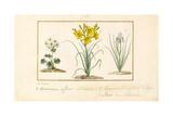 Annemone, Hemerocale and Iris Giclee Print by Pancrace Bessa