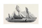 Vixen Giclee Print by Nicholas Matthews Condy