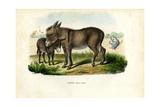 Donkey, 1863-79 Giclee Print by Raimundo Petraroja