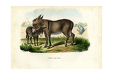 Donkey, 1863-79 Lámina giclée por Raimundo Petraroja