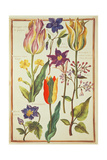 Flower Studies Giclee Print by Nicolas Robert