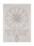Study for a Cornflower, 1808 Giclee Print by Philipp Otto Runge