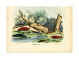 Limax Snail, 1863-79 Giclee Print by Raimundo Petraroja