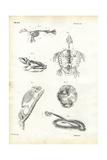 Turtle, 1863-79 Giclée-tryk af Raimundo Petraroja