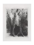 Je Me Suis Enfonce Dans La Solitude, 1896 Giclee Print by Odilon Redon