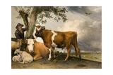 Paulus Potter - The Bull, 1647 Digitálně vytištěná reprodukce