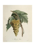 White Muscat Grapes Giclee Print by Pierre Jean Francois Turpin