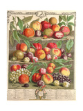 August, from 'Twelve Months of Fruits', by Robert Furber (C.1674-1756) Engraved by C. Du Bose, 1732 Giclee Print by Pieter Casteels