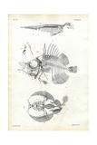 Seal, 1863-79 Giclee Print by Raimundo Petraroja