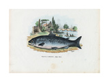 Brown Trout, 1863-79 Giclee Print by Raimundo Petraroja