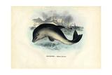 Harbour Porpoise, 1863-79 Giclee Print by Raimundo Petraroja