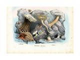 Sea Anemones, 1863-79 Giclee Print by Raimundo Petraroja