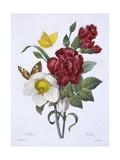 Ellebore Et Oeillet, from 'Choix Des Plus Belles Fleurs', Published Paris, 1829 Giclee Print by Pierre Joseph Redoute