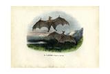 Spectral Bat, 1863-79 Giclee Print by Raimundo Petraroja