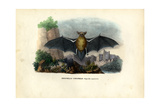 Common Pipistrelle, 1863-79 Giclee Print by Raimundo Petraroja