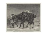 Winter Giclee Print by Richard Beavis