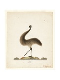The Emu, 1820 Giclee Print by Richard Browne
