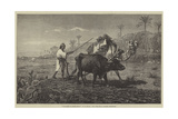 Ploughing in Lower Egypt Giclee Print by Richard Beavis
