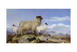 Ewe and Lambs Giclee Print by Richard Ansdell