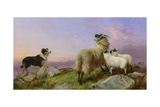 Collie, Ewe and Lambs Impression giclée par Richard Ansdell