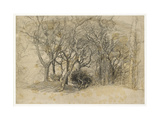 Study of Trees, Clovelly Park, 1834 Giclee Print by Samuel Palmer