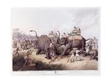 The Dead Tiger; Mort Du Tigre, 1807 Giclee Print by Samuel Howitt