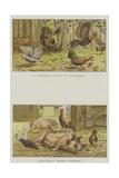Farmyard Scenes Reproduction procédé giclée par S.t. Dadd