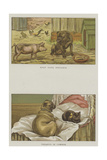 Humorous Dogs Giclee Print by S.t. Dadd