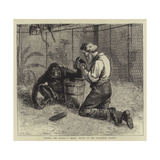 Tending the Invalid, a Recent Sketch at the Zoological Gardens Giclee Print by Samuel Edmund Waller