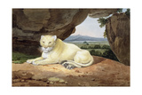 Lioness Giclee Print by Samuel Howitt