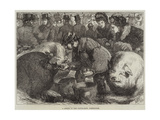A Sketch at the Cattle-Show, Birmingham Giclee Print by Samuel John Carter