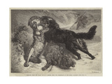 Rescued from the Wolf Giclee Print by Samuel John Carter