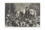 Frost-Bound Giclee Print by Samuel John Carter