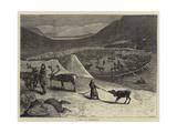 A Pen of Reindeer Giclee Print by Samuel Edmund Waller