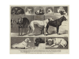 The Birmingham Dog Show, Some of the Prize-Winners Giclee Print by Samuel Edmund Waller
