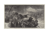 A Stampede from a Wolf Giclee Print by Samuel John Carter
