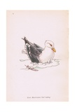 Great Black Backed Gull Giclee Print by Robert George Talbot Kelly