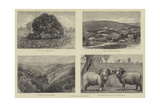 Pictures of South Australia Giclee Print by Samuel Edmund Waller