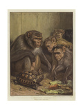 A Darwinian Question Giclee Print by Samuel John Carter