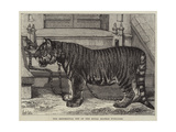 The Regimental Pet of the Royal Madras Fusiliers Giclee Print by Samuel John Carter