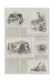 Colonial and Indian Exhibition, Western Australia Reproduction procédé giclée par S.t. Dadd