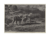 The Three Brothers Giclee Print by Rosa Bonheur