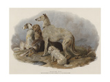 Highland Dogs Giclee Print by Edwin Landseer