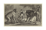 A New Arrival at the Zoological Society's Gardens, Regent's Park Giclee Print by Samuel John Carter