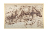 Cattle in Pasture, C.1618-20 Giclee Print by Sir Anthony van Dyck