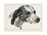 Head of Pointer (Dog), 1873 Giclee Print by Edwin Landseer