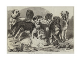 Prize Dogs in the National Dog Show at Islington Giclee Print by Samuel John Carter