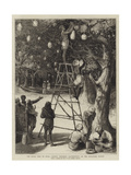 The Royal Visit to India, Natives Preparing Illuminations on the Esplanade, Bombay Giclee Print by Samuel Edmund Waller